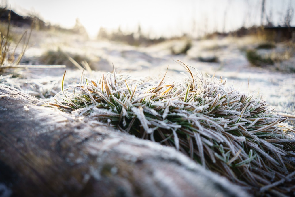 Winter1-0754