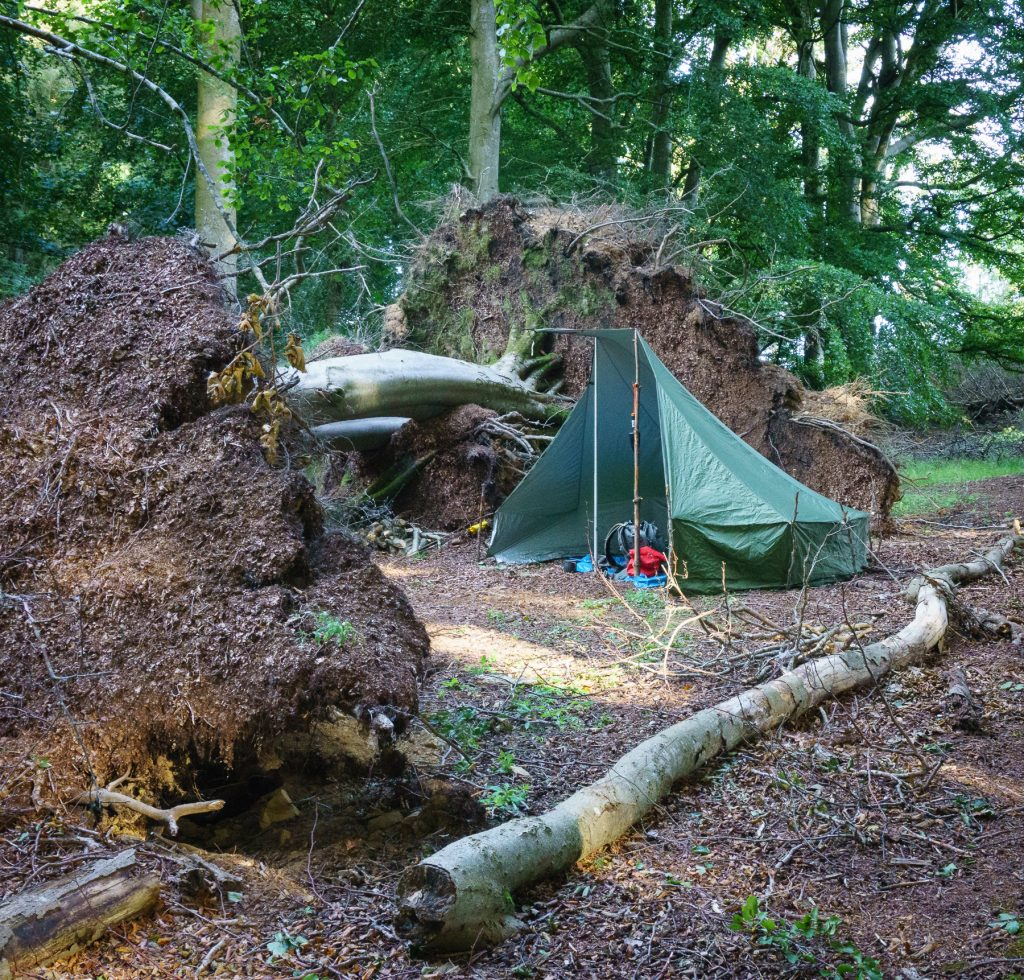 Three trees down campsite